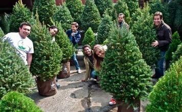 Navidad sustentable rentar un árbol o comprar un pino en maceta
