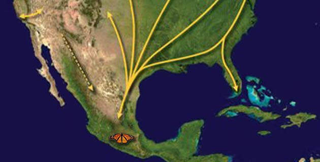 ruta_migracion_mariposa_monarca