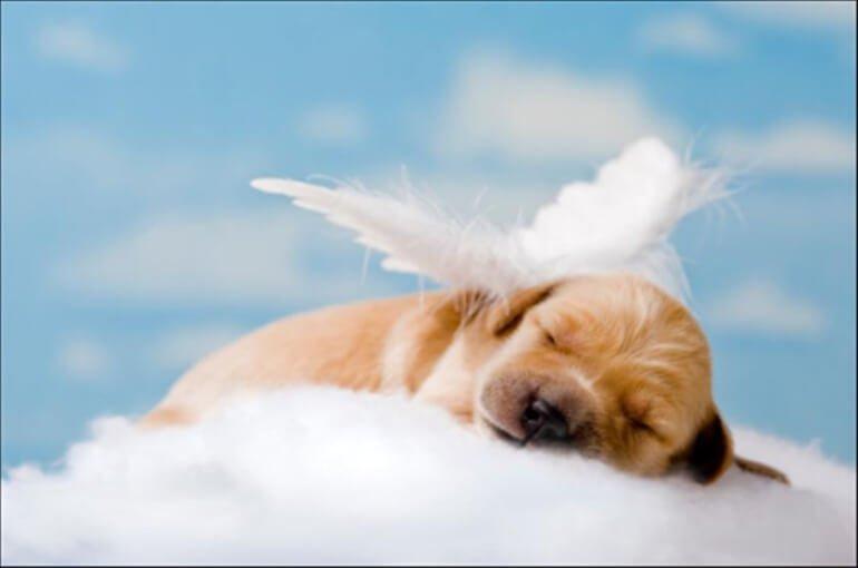 El puente arco iris cuando un perro muere