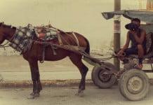 Abuso Animal Reynosa