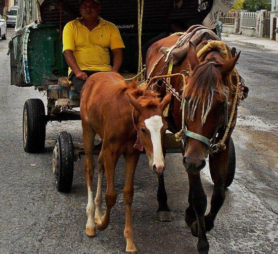 """La  """"Ciudad de Reynosa"""" perpetua el maltrato a los animales y el rezago cultural."""