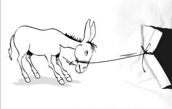 ser terco , persistente perseverante como mula