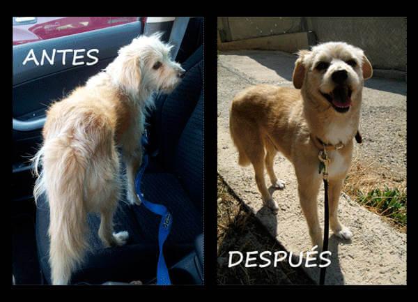 perro de la calle adoptado