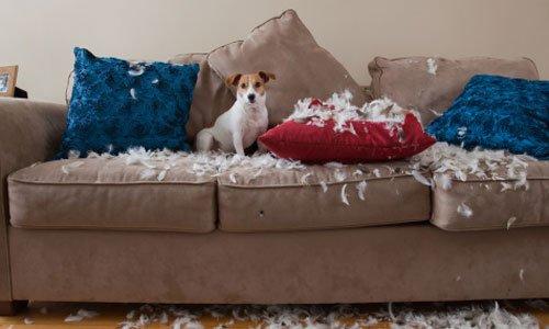 perro pequeño apartamento