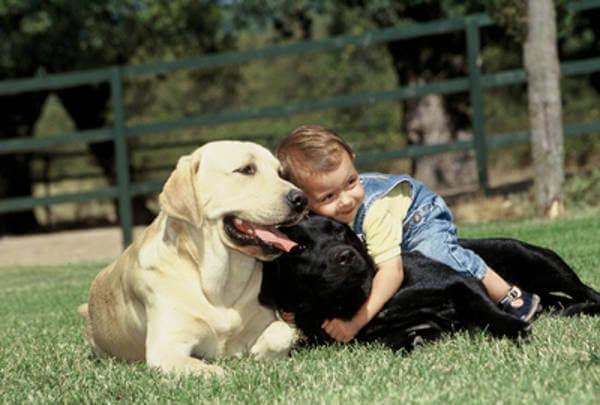 perros grandes y bebes primer perro