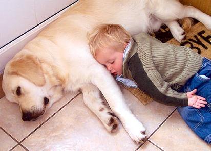 perros grandes y niños