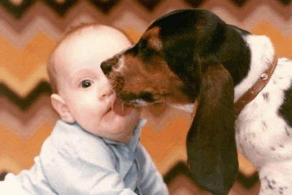 perros pequeños no son para bebés