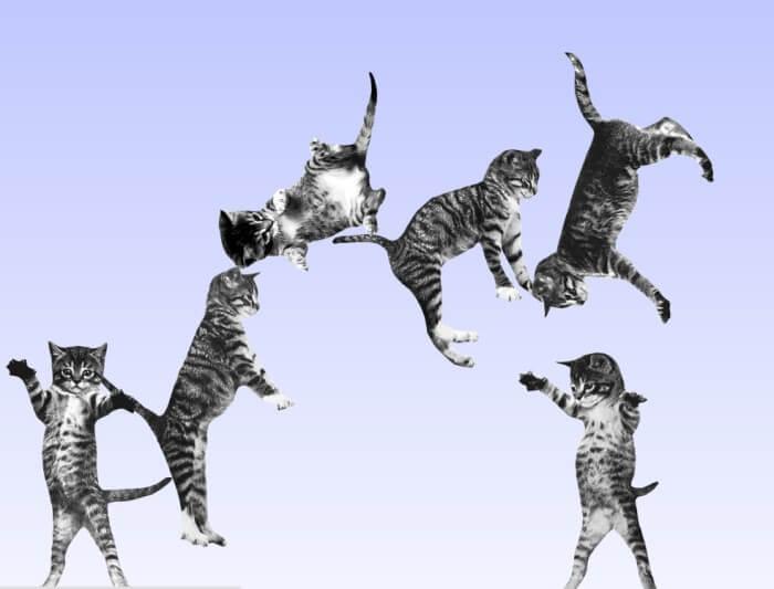 Gatos rebotando