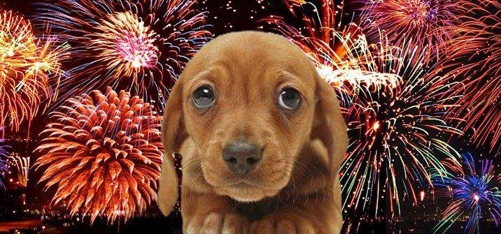Cómo cuidar a tu mascota perro o gato de los fuegos artificiales