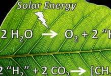 hojas artificiales energia solar