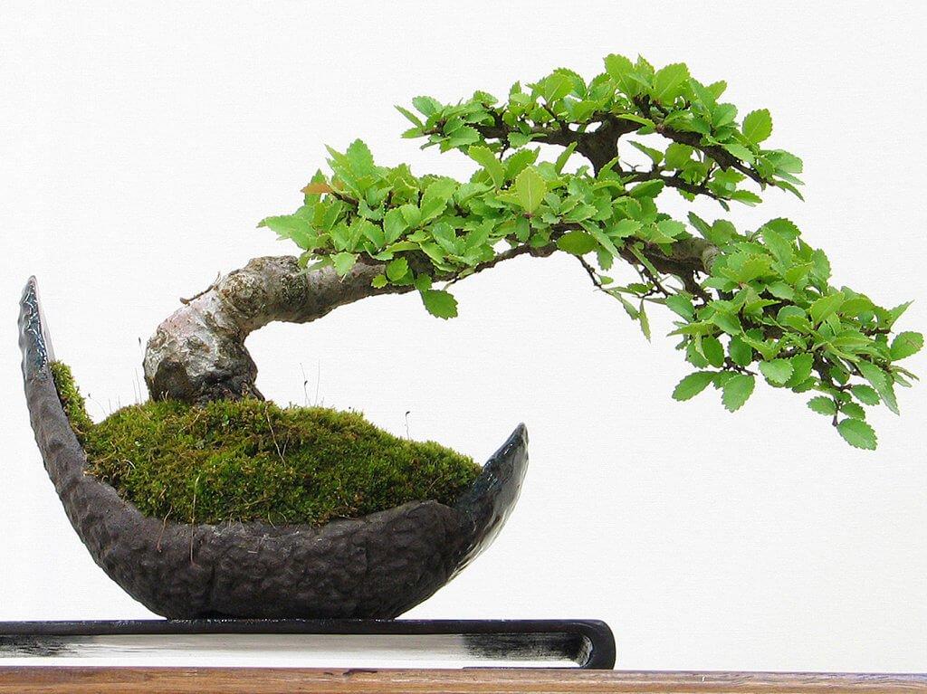 Plantas dentro de la casa o departamento neostuff - Plantas para bonsai ...
