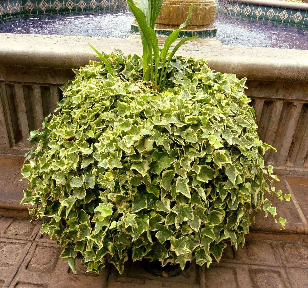 Plantas dentro de la casa o departamento neostuff - La casa de la maceta ...
