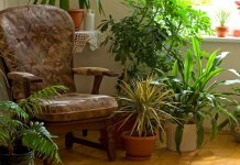plantas-para-interiores-de-casa-departamento