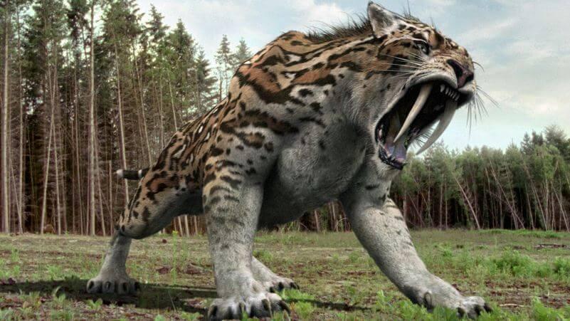 tigre dientes de sable extinción
