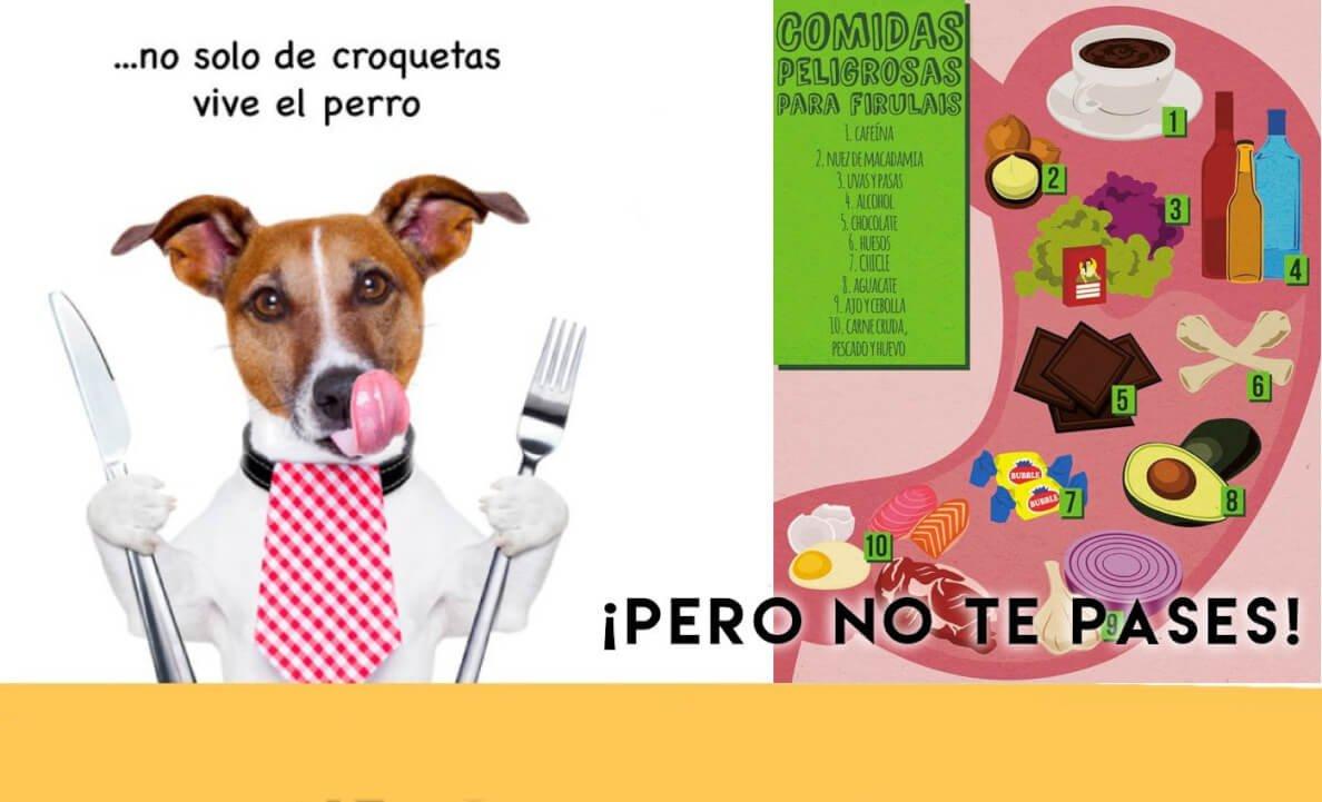 comidas peligrosas para perros y mascotas
