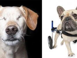 Fotógrafa retrata la belleza de perros rescatados