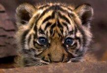 La Declaración Universal de los Derechos de los Animales