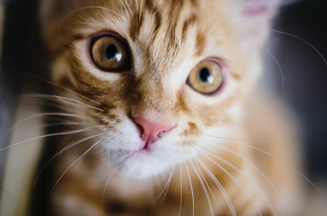 Semáforo de croquetas para gatos
